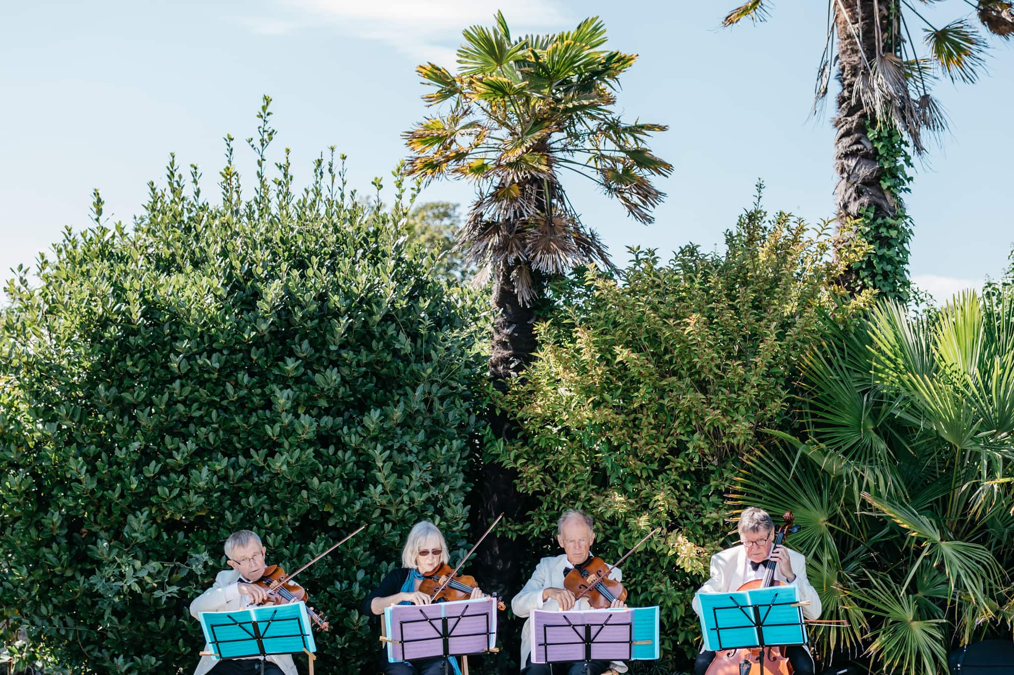 Violinists at wedding
